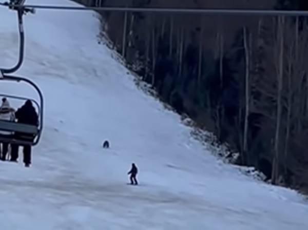 When the bear fell behind, watch the video